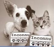 identification-animaux