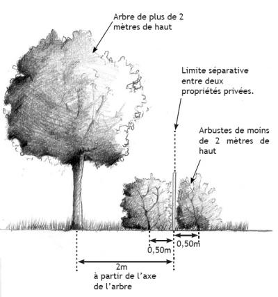 schema-plantations-985